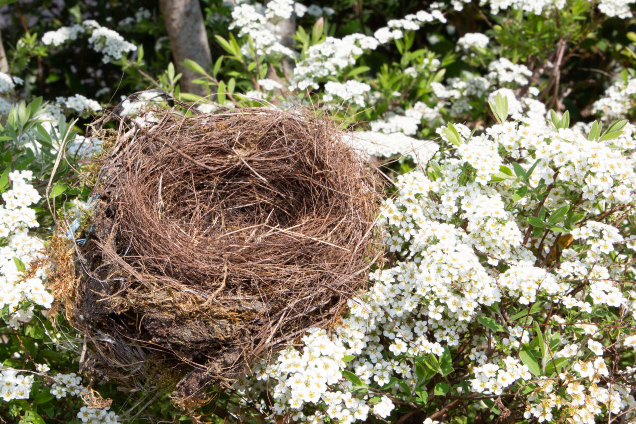 empty nest image